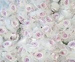 Satin Rose Organza & Pearl Favor Flowers - Pkg 120