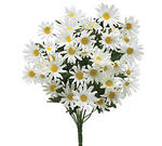 Silk White Daisy Bush